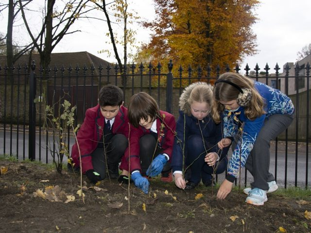 Highgate School children planting tree saplings to support biodiversity