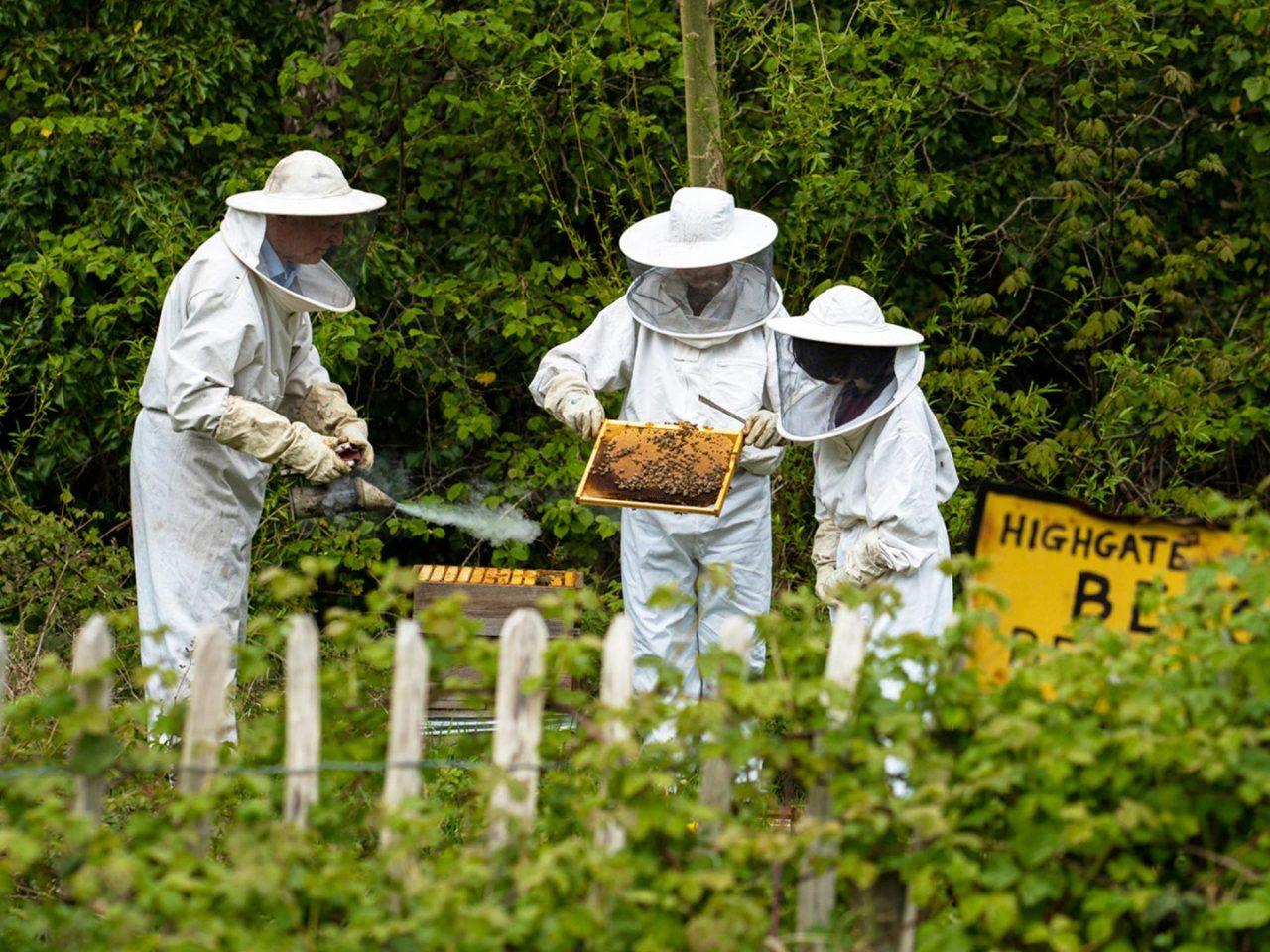 Senior School Beekeeping